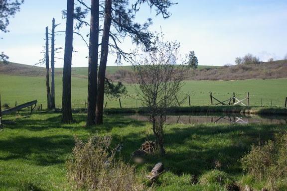 Idaho-Ranch-IMGP5184