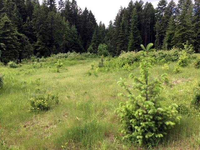 93 North Idaho Acres for Sale